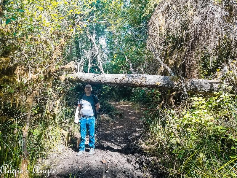 Leadbetter Point - Tree Down
