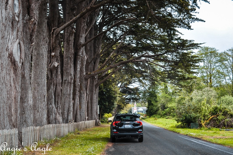 GMC Terrain Under the Trees