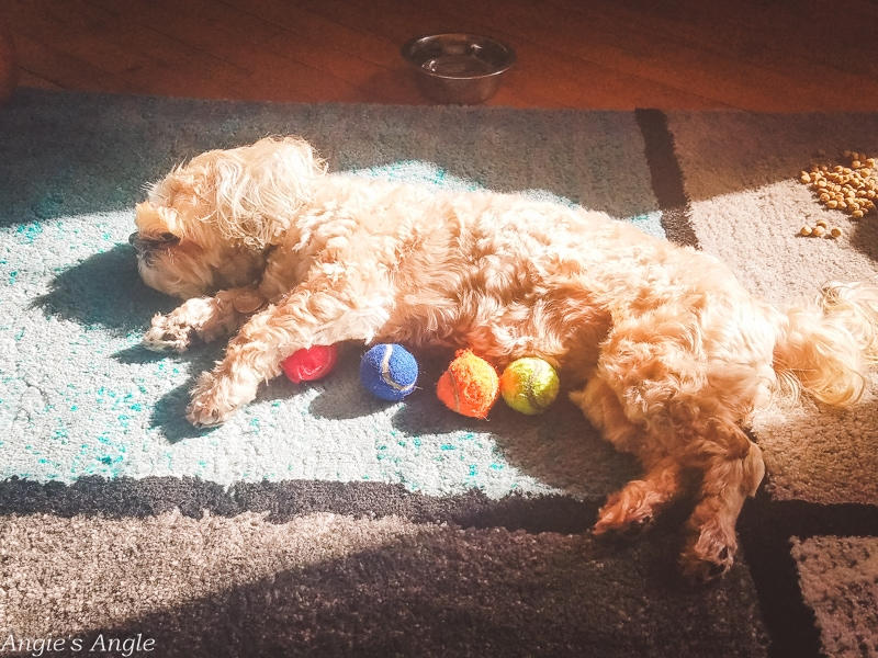 2019-Catch-the-Moment-365-Week-35-Day-243-Roxy-and-Her-Kong-Balls