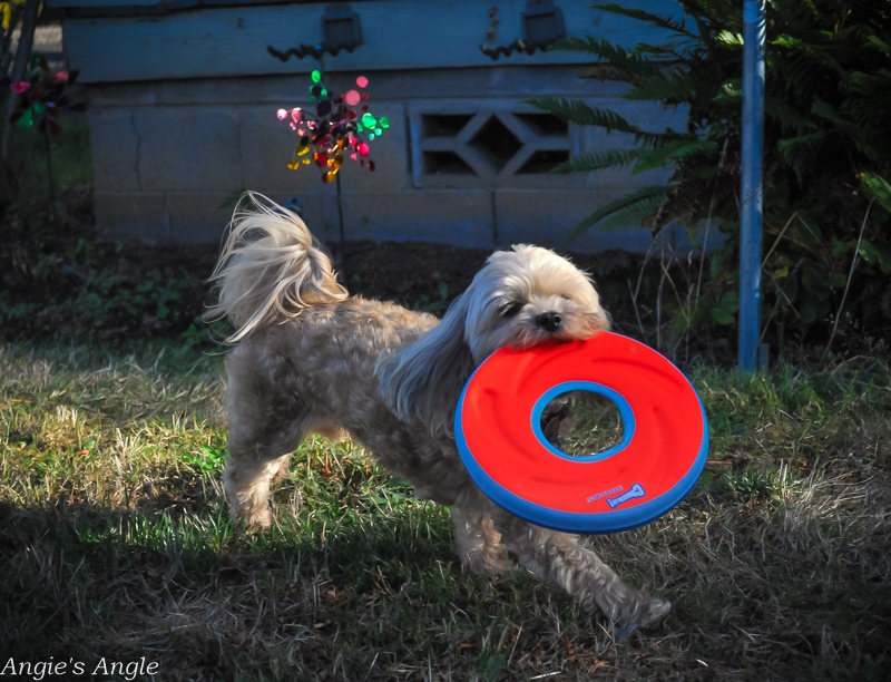 Fetch-With-Your-Dog-9