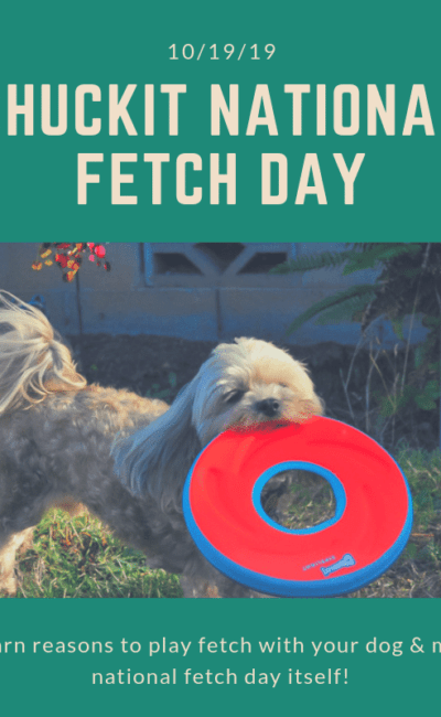 Delightful Reasons to Play Fetch With Your Dog