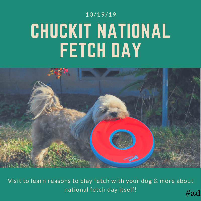 Fetch-With-Your-Dog-Social