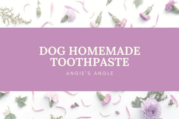 Update-On-My-Dog-Heart-Murmur-Dog-Homemade-Toothpaste-1