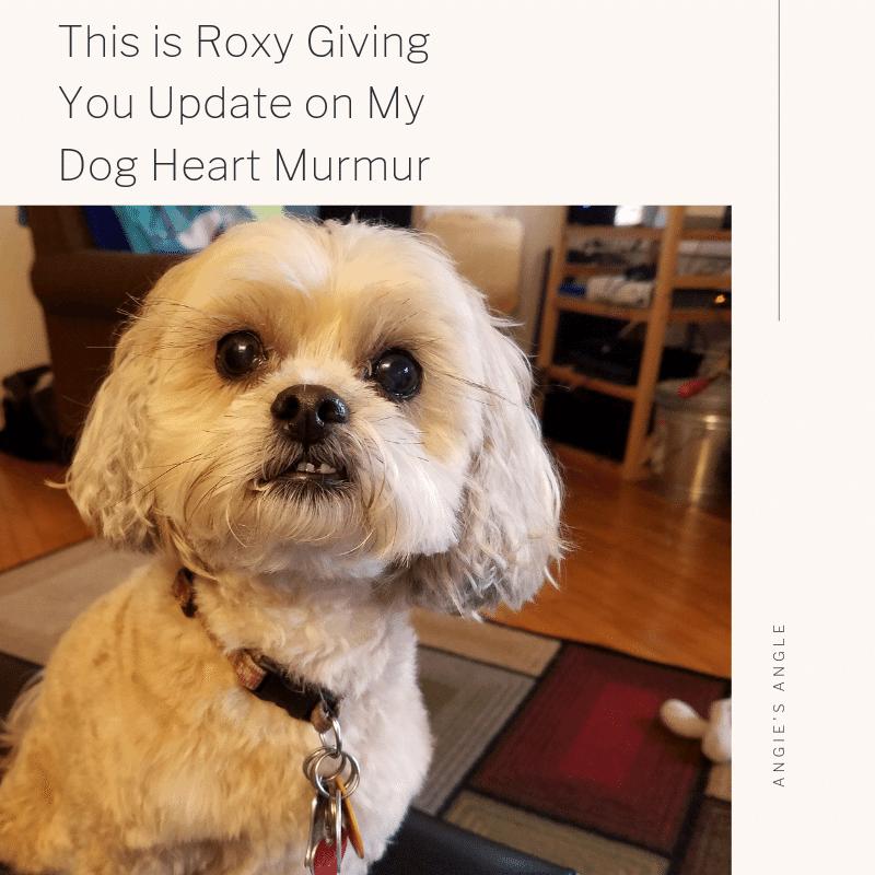 Update-on-My-Dog-Heart-Murmur-Social