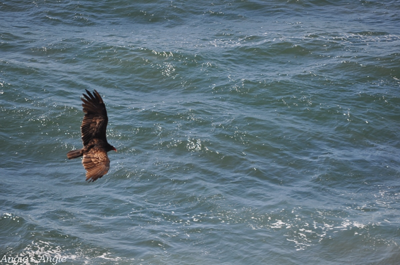 2019-Catch-the-Moment-365-Week-39-Day-267-Big-Bird-Flying-Over-Ocean