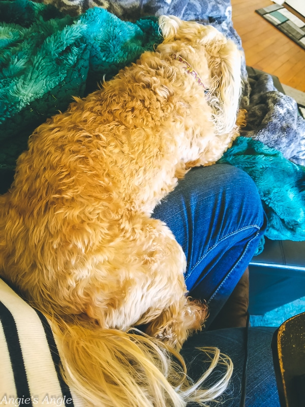 2019-Catch-the-Moment-365-Week-39-Day-273-Cool-Weather-Cuddles
