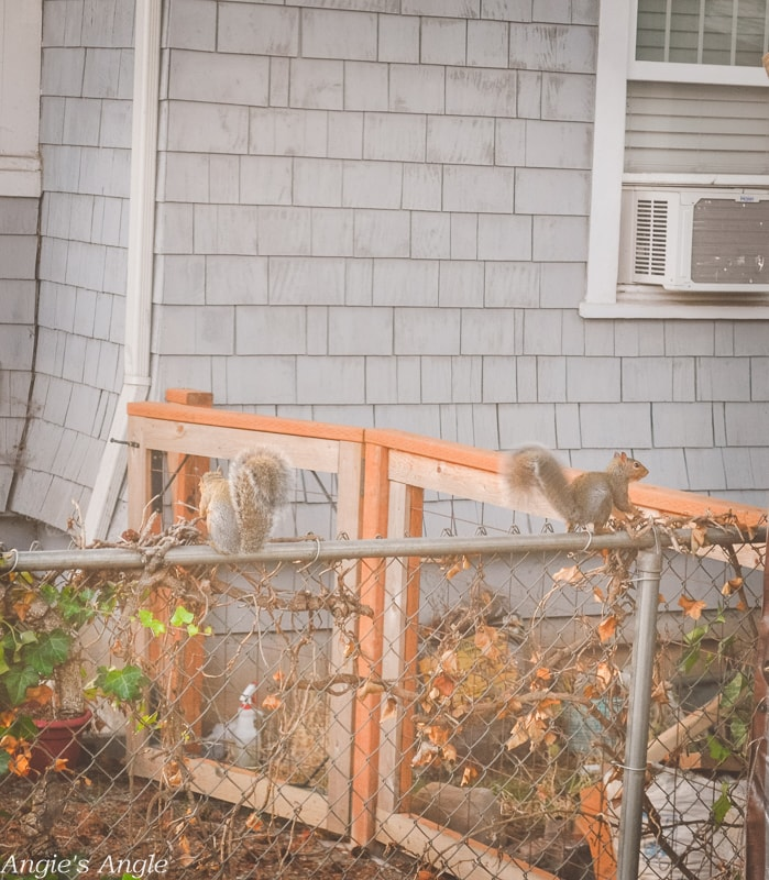 2019-Catch-the-Moment-365-Week-40-Day-277-Couple-Cute-Squirrels