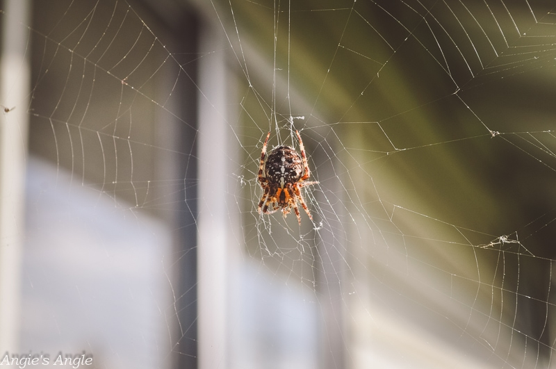 2019-Catch-the-Moment-365-Week-43-Day-300-Spider-in-Web