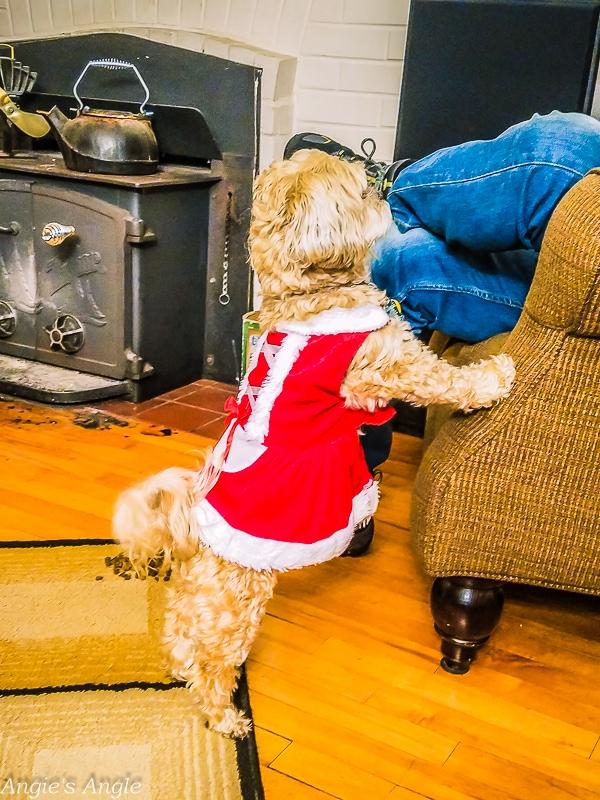 Christmas Dress Roxy