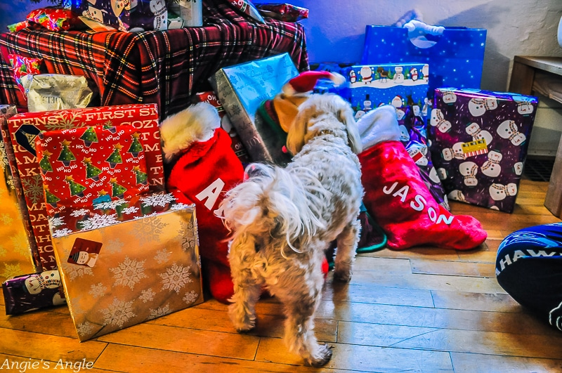 Roxy Sniffing Christmas Gifts and Stockings
