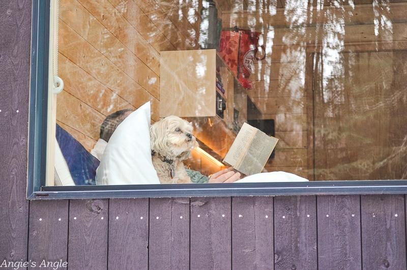 Mt Adams Getaway House - Fine I'll Cuddle in Says Roxy