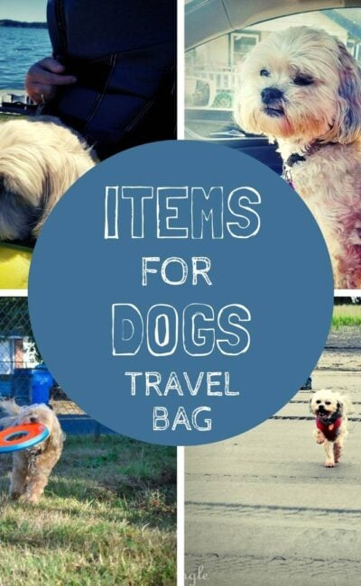 See What the Best Items are for a Dogs Travel Bag