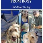 Roxy All About Turkey - Pin