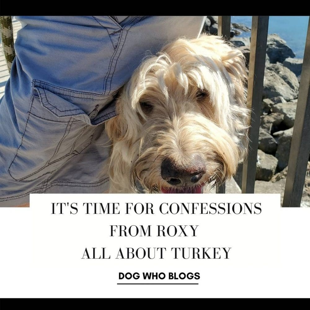 Roxy All About Turkey - Social