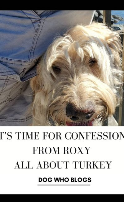 It's Time for Confessions from Roxy All About Turkey